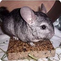 Adopt A Pet :: Diego - Avondale, LA