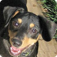 Adopt A Pet :: Baby Phelpps - Oakley, CA
