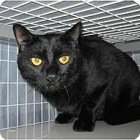 Adopt A Pet :: Myrrh - Warminster, PA