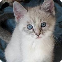 Adopt A Pet :: Bethany - Davis, CA