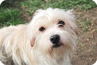 Terrier (Unknown Type, Medium) Mix Dog for adoption in Marina del Rey, California - Mookie