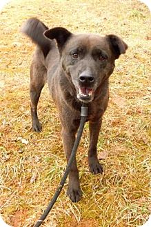 Chow Chow Mix Dog for adoption in Bardonia, New York - Lacey