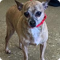 Adopt A Pet :: Ricky - Plano, TX