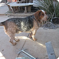 Adopt A Pet :: Roscoe - Albuquerque, NM