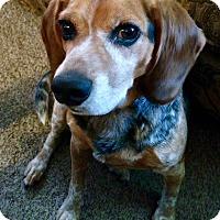 Adopt A Pet :: Clyde - New Kensington, PA