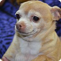 Adopt A Pet :: Floyd - Ogden, UT