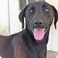 Adopt A Pet :: Connie - Glenwood, GA