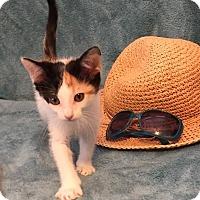 Adopt A Pet :: Madeleine - Little Rock, AR