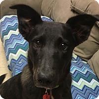 Adopt A Pet :: Farasha - Grayslake, IL