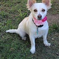 Adopt A Pet :: Bella - Bandera, TX