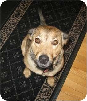Shepherd (Unknown Type) Mix Dog for adoption in Okotoks, Alberta - Bella