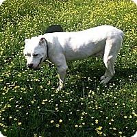 Adopt A Pet :: Aspen - Cookeville, TN