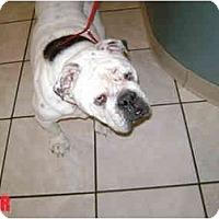 Adopt A Pet :: Chunk - Winder, GA