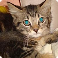 Adopt A Pet :: Inez - Miami, FL