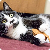 Adopt A Pet :: Chickie - Chicago, IL