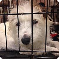 Adopt A Pet :: Annah - Gainesville, FL