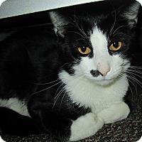 Adopt A Pet :: Loki - Norwich, NY