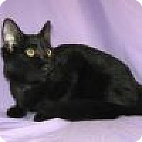 Adopt A Pet :: Pasha - Powell, OH