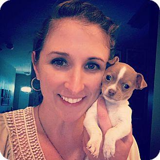 Chihuahua Puppy for adoption in Macon, Georgia - Primrose