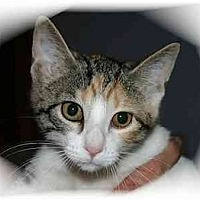 Adopt A Pet :: Gwen - Montgomery, IL