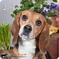 Adopt A Pet :: Angel - Yardley, PA