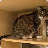 Adopt A Pet :: Charlotte - Harrison, NY