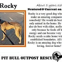 Adopt A Pet :: Rocky - Lafayette, OR