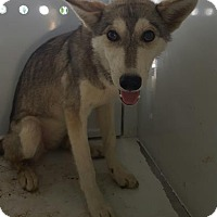 Adopt A Pet :: Miley - Fresno CA, CA