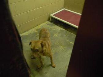 Terrier (Unknown Type, Small)/Retriever (Unknown Type) Mix Dog for adoption in Monticello, Georgia - freeway