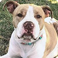 Adopt A Pet :: Freedom - St Helena, CA