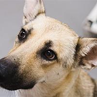 Adopt A Pet :: Sheila - Dallas, TX