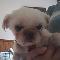 Adopt A Pet :: Salsa - Schofield, WI