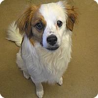 Adopt A Pet :: Tucker - Wickenburg, AZ