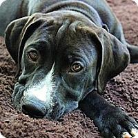 Adopt A Pet :: Titan - Reisterstown, MD