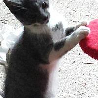 Adopt A Pet :: Rikki and Ripley - brewerton, NY