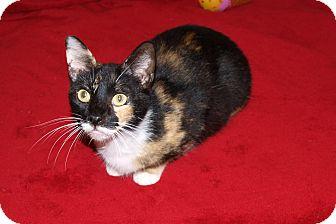 Calico Cat for adoption in Jackson, Mississippi - Precious