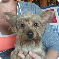 Adopt A Pet :: Marcello - Greenville, RI
