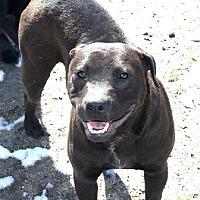 Adopt A Pet :: Allie - Littlerock, CA