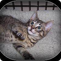 Adopt A Pet :: Joey - South Plainfield, NJ