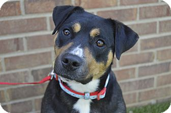 Terrier (Unknown Type, Medium) Mix Dog for adoption in Germantown, Tennessee - Miley
