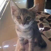 Adopt A Pet :: Josie - El Cajon, CA