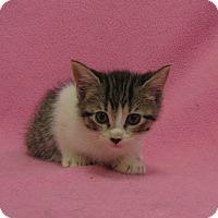 Adopt A Pet :: Khloe - Redwood Falls, MN