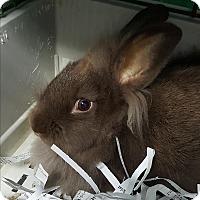 Adopt A Pet :: Parker - Pottsville, PA