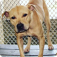 Adopt A Pet :: Remco - Haines City, FL
