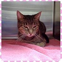 Adopt A Pet :: BESSIE - Marietta, GA