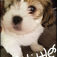 Adopt A Pet :: Skittles - Palm Bay, FL
