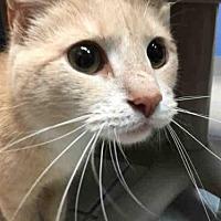 Adopt A Pet :: SGT PEPPER - Canfield, OH