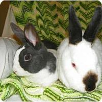 Adopt A Pet :: Sydney - North Gower, ON