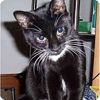 Adopt A Pet :: Set - Richmond, VA
