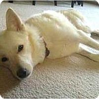Adopt A Pet :: Lily - Seattle, WA